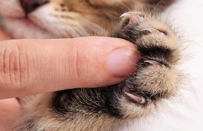 Come abituare il gatto a non graffiare
